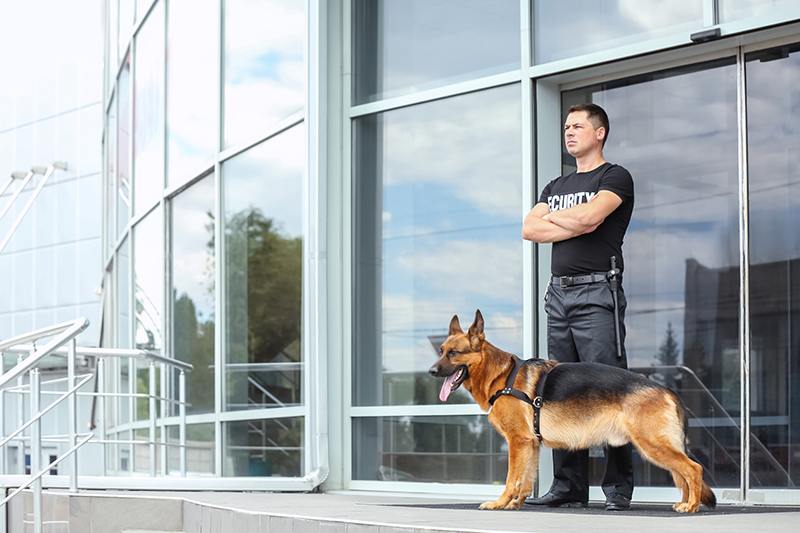 Security Guard Cv in Doncaster South Yorkshire